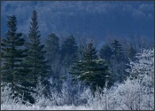 Early Canaan Valley frost